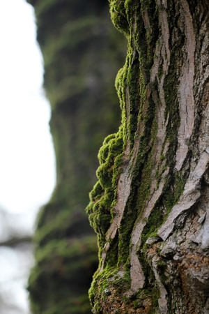 Moss on a tree photo