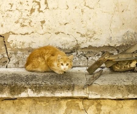 Wild cat Stock Photo - 13555547