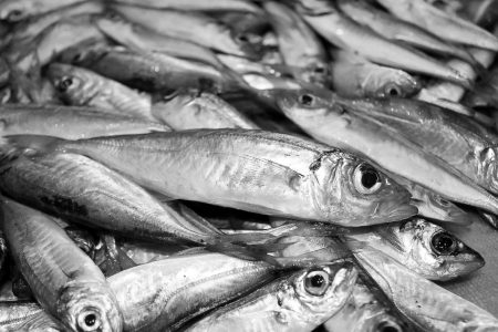 greenling: Fresh mackerel Stock Photo