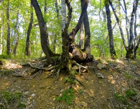 fungi woodland: The roots of the tree                                Stock Photo