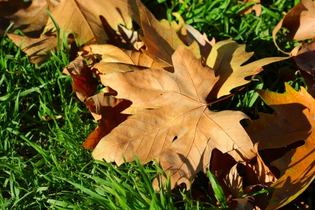 frondage: Fall of the leaf