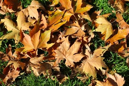 lonesomeness: Leaf fall