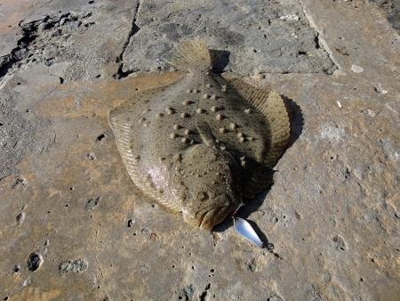 jigging: Flounder