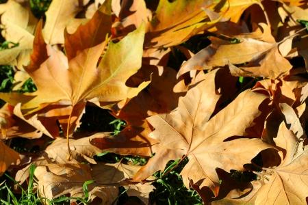 lonesomeness: Autumn background