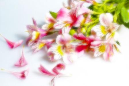 frondage: Beautiful plant