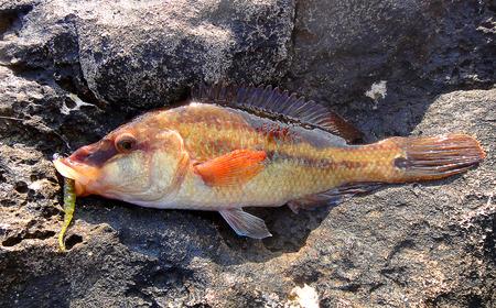 jigging: Fishing