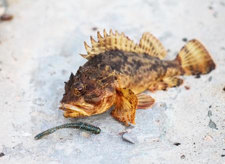 color image fish hook: Fshing