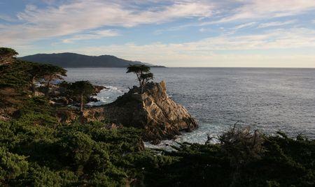 monterey: lone cypress in monterey CA