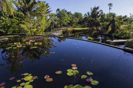 Waterlilies in a botanical garden, in Naples, Florida, united states