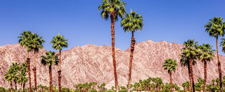 San Jacinto mountain and coconut trees in Palm Springs, California, usa