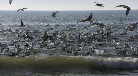 seagulls flyng over the waves on the ocean