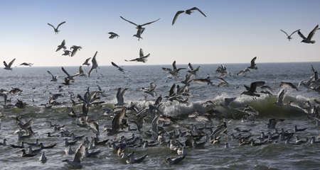 seagulls flyng over the waves on the ocean Foto de archivo