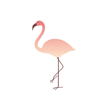 Colorful pink flamingo isolated on white background. Summer Vector Illustration. EPS10 Stock Photo