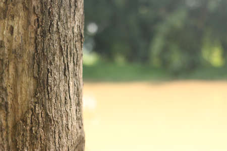 Teak Baumstamm auf gelbem Hintergrund Wasser