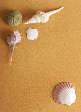 shells on sand background with copy space. photo