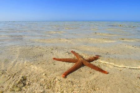 fish star: Estrella de mar o pescados de la estrella en una playa de arena blanca de coral en un arrecife de coral tropical con espacio de copia. Foto de archivo
