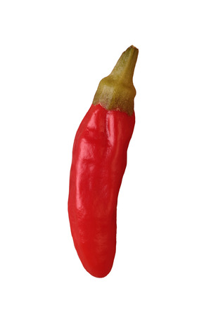 spicey: Red piri piri chilli isolated on a white background.