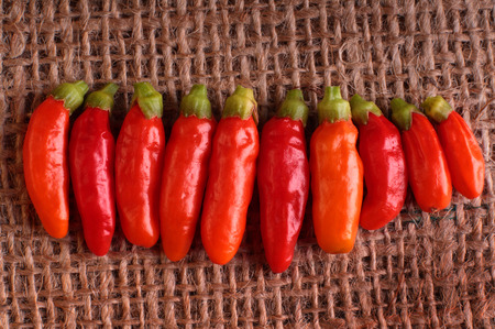 piri piri: Line of red piri piri chilli peppers on a hessian background.