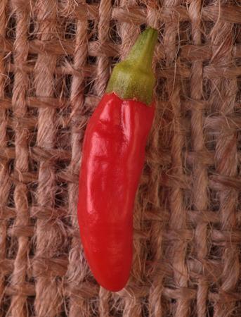 spicey: Red piri piri chilli on a rustic burlap background.
