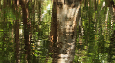 Trees and foliage reflected in the tranquil water of a fresh water lagoon in tropical North Queensland.