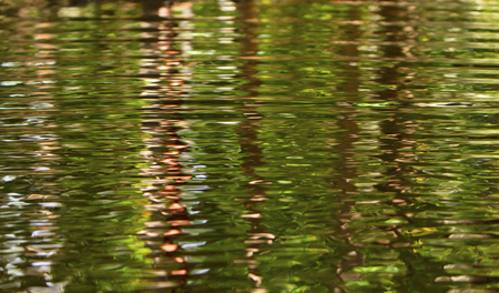 Trees reflected in a fresh water creek in tropical North Queensland with ripples on the surface. Stock Photo