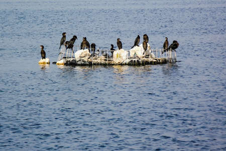 different birds sit on a small island in the middle of Lake Hula