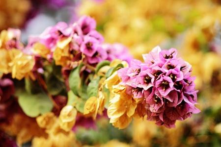 flowers in summer evening in zaragoza Stock Photo - 12983714