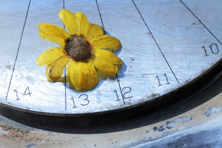 metal base: daisy expresses beauty resting on a metal base