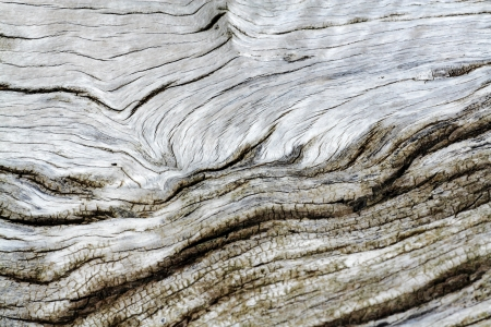 tree bark texture old highlight texture and relief Stock Photo