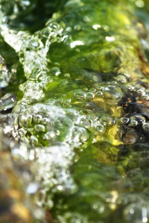 mosses: abstract scene texture of aquatic plants and mosses Stock Photo