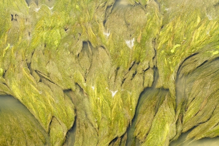 aquatic vegetation abstraction scene texture and color highlighting photo