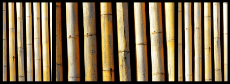 bamboo trunks collage on black background photo