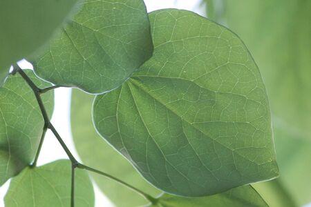 underside of bright green leaves sun glare