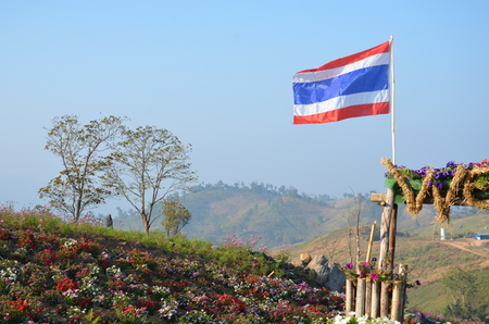 Flag of Thailand, Khao Kho National Park Winter flowers. Stock Photo