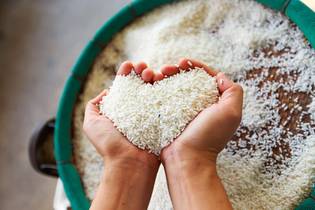 Rice in hand. Plenty of rice in hand. Stock Photo