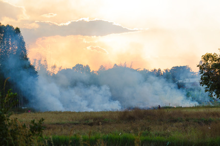 Fire burning dried sugarcane and grass field caused air pollution and global warming photo