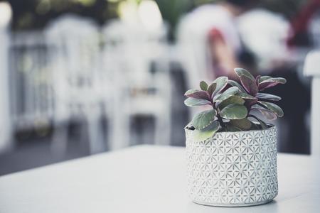 botanical farms: green plant in ceramic pot still life