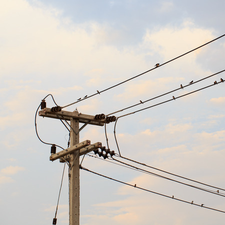 unorganized: electricity post, birds on wire and blue sky at sunset background