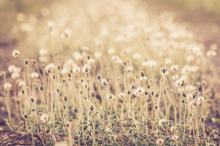 swaying: Beautiful grass swaying in the summer. background Stock Photo
