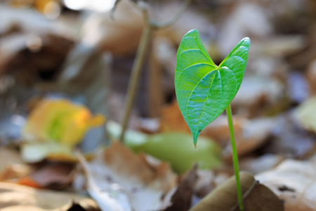 regenerate: Little tree growing from ground Stock Photo