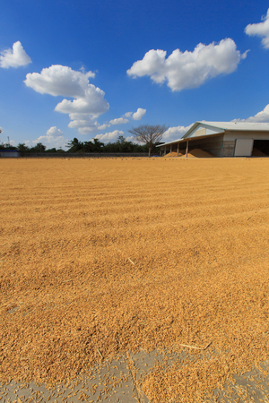 humidity: Paddy husk drying to reduce humidity