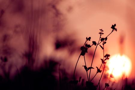 年代物: ヴィンテージの自然