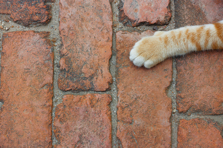brick floor: cat paw on brick floor  backgrounds