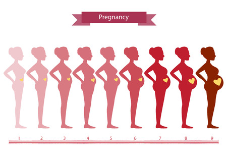Changes in a woman's body in pregnancy,Silhouette pregnancy stages, Vector illustrations