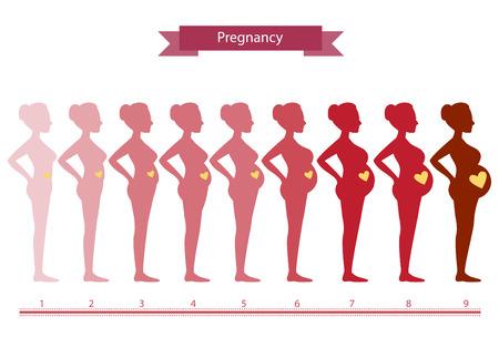 Veränderungen im Körper einer Frau in der Schwangerschaft, Silhouette Schwangerschaft Stadien, Vektor-Illustrationen