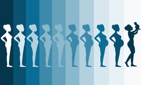 two tone: Changes in a womans body in pregnancy,Silhouette pregnancy stages, Vector illustrations Illustration