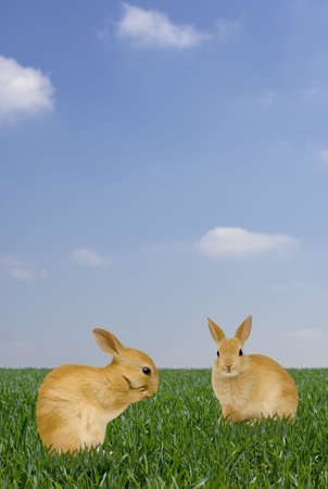 rabit: Two Rabbits in the garden Stock Photo