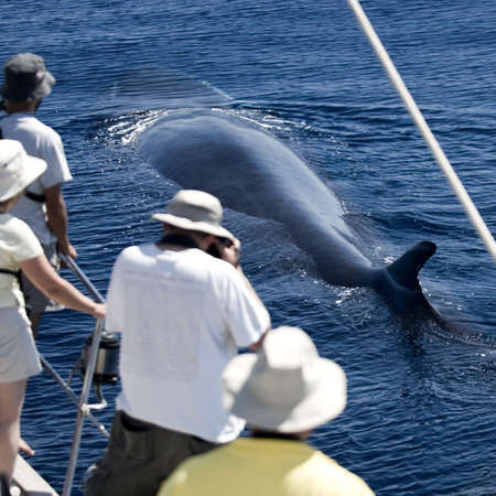 transparence: Tourists watching a whale, view from back Stock Photo