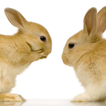 two rabits against white background Stock Photo