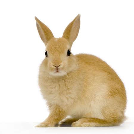 tame: Conejo contra el fondo del whit que mira la c�mara fotogr�fica